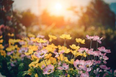 4 Tips for Running a Gardening Franchise