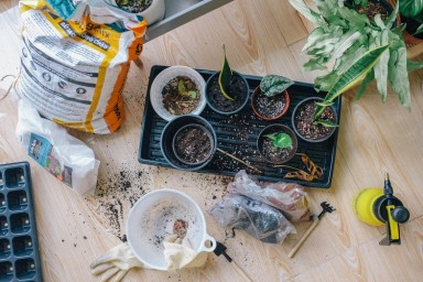 How to Make a Career Change With a Gardening Franchise