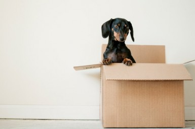 How to Make a Career Change With a Moving Franchise