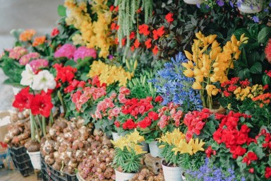 How to Choose the Florist Franchise That's Right For You