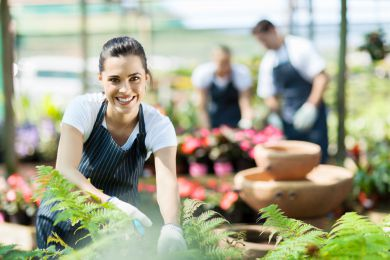 6 Tips for Building a Business Plan for a Successful Gardening Franchise
